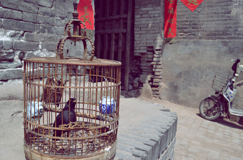pingyao-old-city-architecture-bird